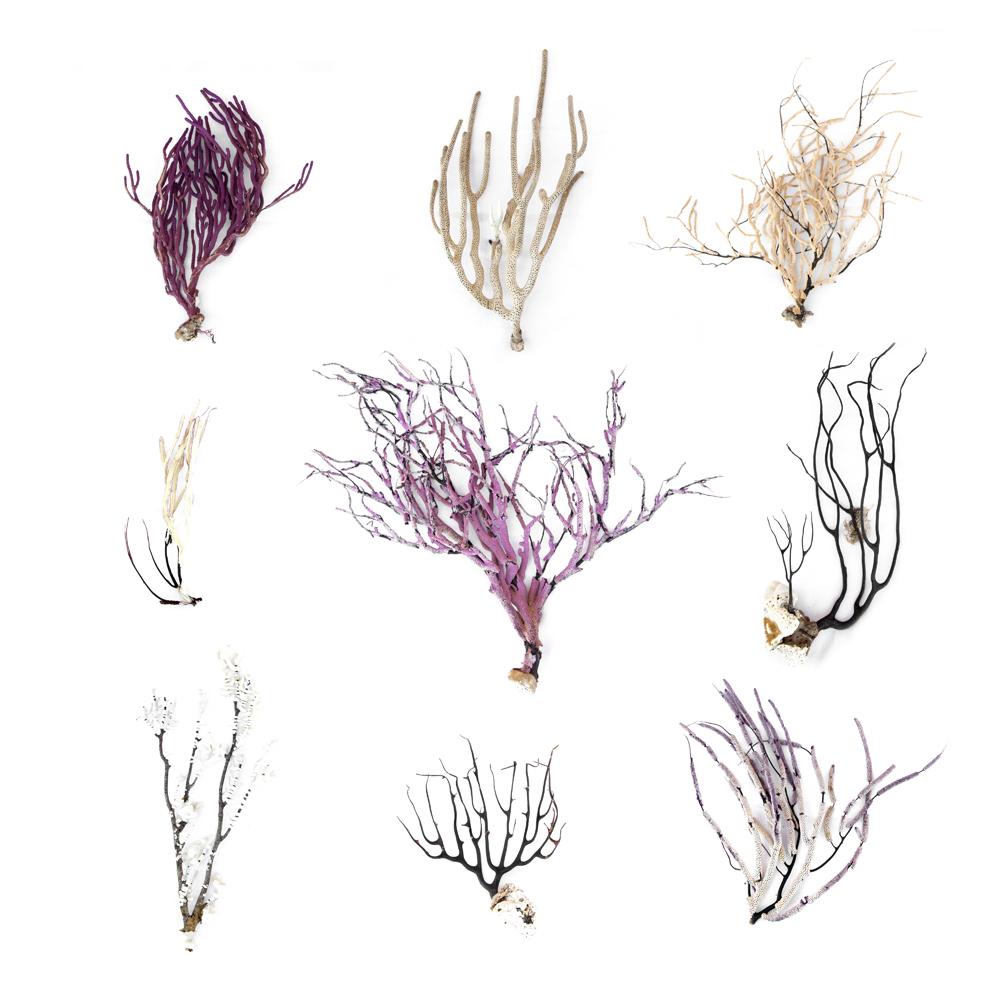 Gorgonians rMatthew Chase-Daniel 2017