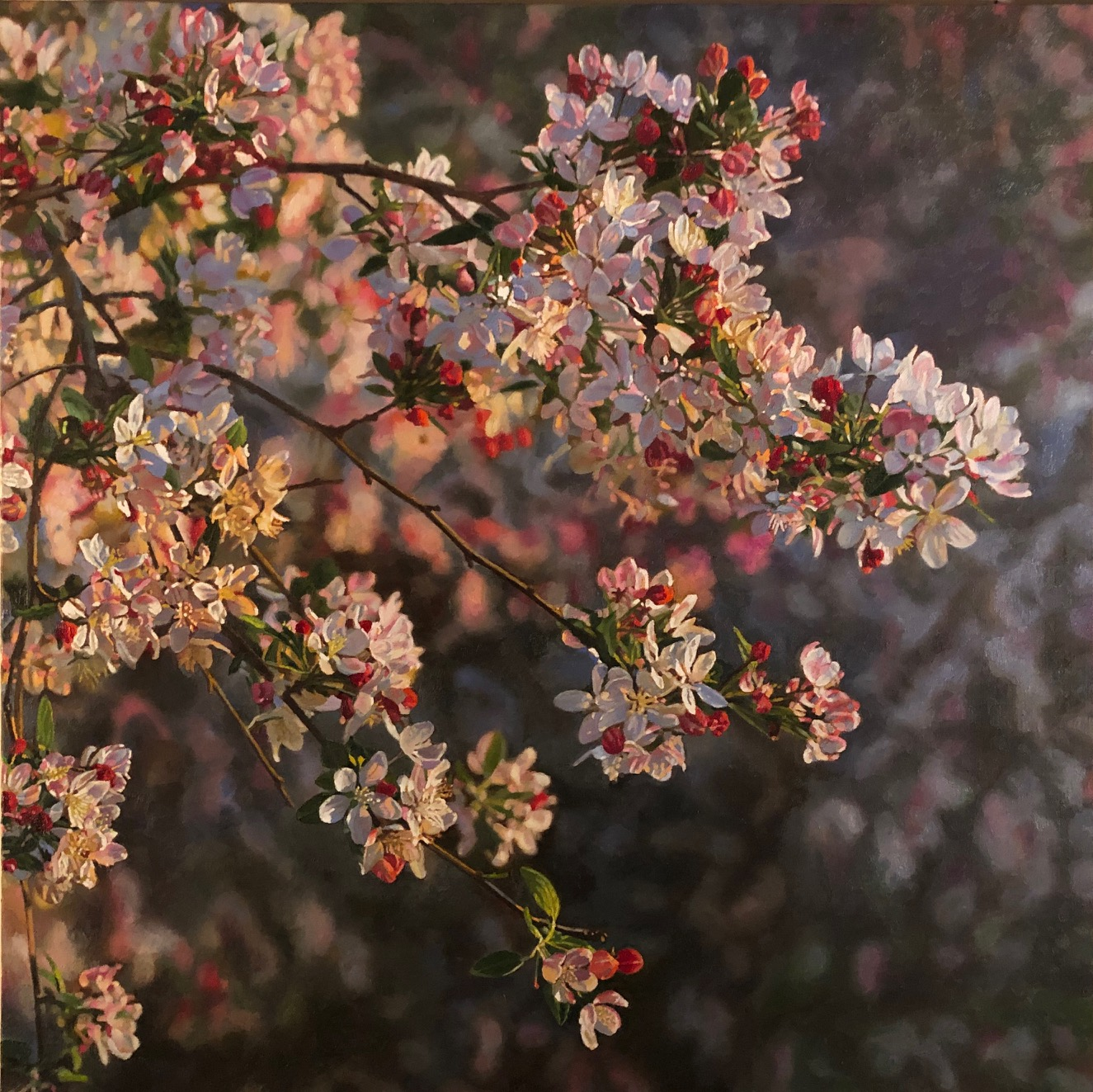"Crabapple Blossoms, 2019, oil on canvas, 30""x30"""