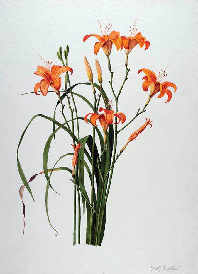 T. Merrill Prentice (1898—1985), Day Lily, 1969, Watercolor, 24 x 18 1/8 in., New Britain Museum of American Art, Gift of the Artist
