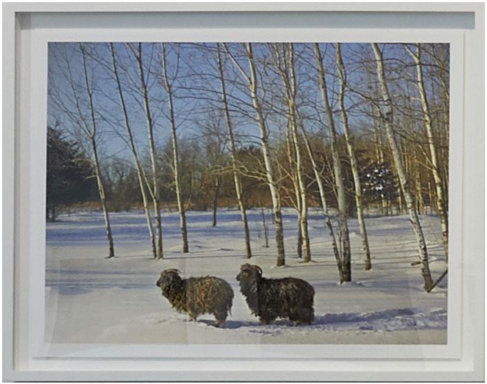 """Annabelle and Friend, Anoka County, Minnesota, USA"", 2017, archival pigment print, 24.5"" x 32"", © R. J. Kern"