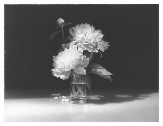 "Skip Steinworth ""White Flowers in Bright Light""  pencil drawing, 22.5"" x 29.5"""